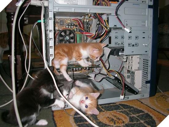 Không thể ngờ máy tính lại là nơi trú ngụ của những tên giặc ngoại xâm này - Ảnh 9.