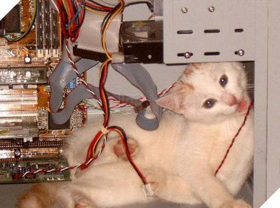 Không thể ngờ máy tính lại là nơi trú ngụ của những tên giặc ngoại xâm này - Ảnh 21.