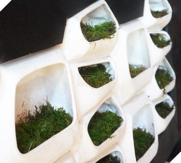 Loại tường rêu này sẽ là giải pháp hữu hiệu cho nhân loại ?