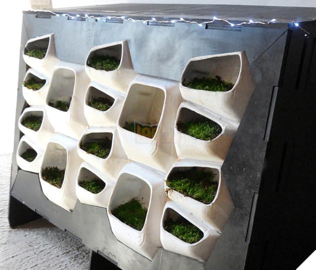 Trong tương lai sẽ xuất hiện những tòa nhà với mặt tiền lỗ chỗ đầy rêu xanh?