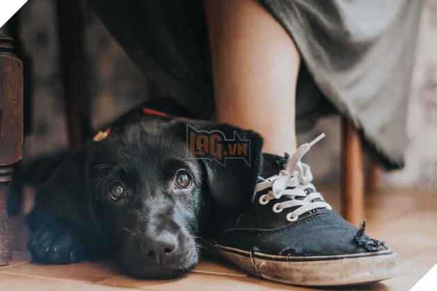 Chú chó Yzma trong tác phẩm mang tên A Girl's Best Friend