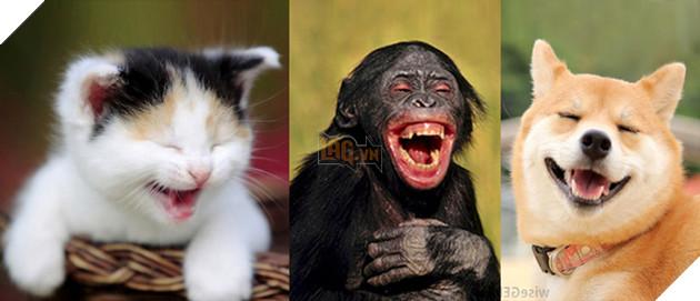 Hỏi lạ: Động vật có biết cười như con người không? - Ảnh 1.