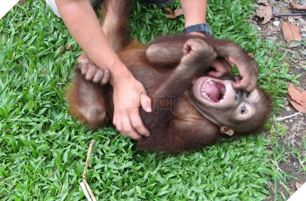 Hỏi lạ: Động vật có biết cười như con người không? - Ảnh 2.