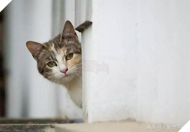 18 bức ảnh chứng minh mèo là 'cao thủ' chơi trốn tìm, chủ nhân đành phải bỏ qua