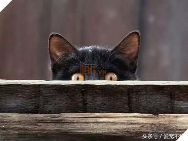 18 bức ảnh chứng minh mèo là 'cao thủ' chơi trốn tìm, chủ nhân đành phải bỏ qua 2