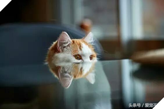18 bức ảnh chứng minh mèo là 'cao thủ' chơi trốn tìm, chủ nhân đành phải bỏ qua 3