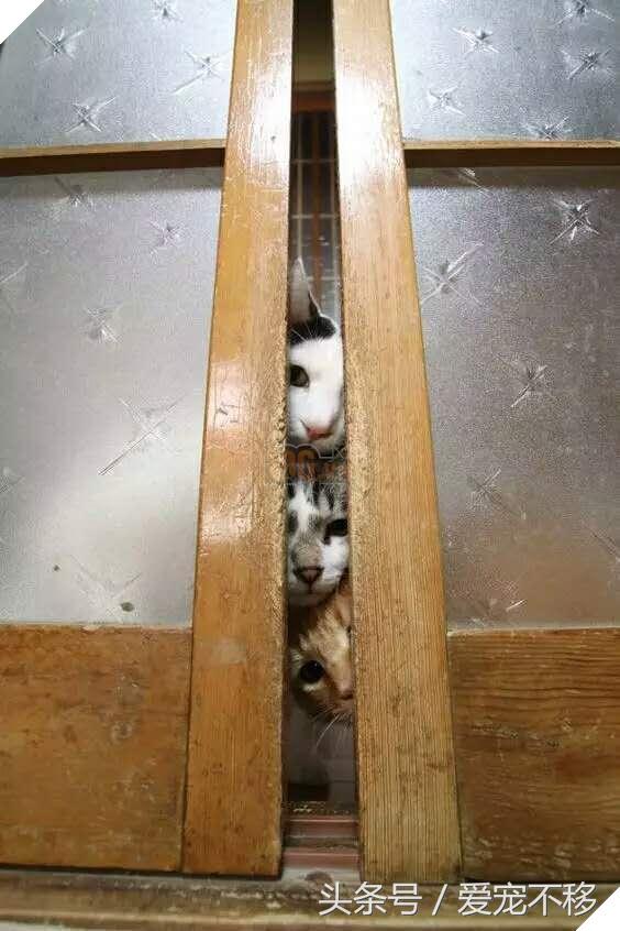 18 bức ảnh chứng minh mèo là 'cao thủ' chơi trốn tìm, chủ nhân đành phải bỏ qua 4