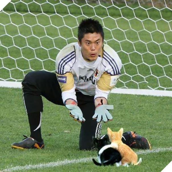 Cười không nhặt được miệng với bộ ảnh mèo xuất hiện trên sân bóng đá - Ảnh 1.