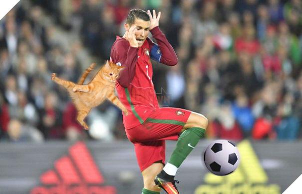 Cười không nhặt được miệng với bộ ảnh mèo xuất hiện trên sân bóng đá - Ảnh 3.