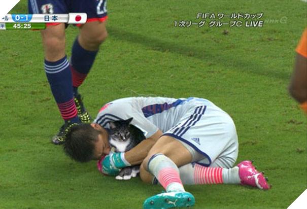 Cười không nhặt được miệng với bộ ảnh mèo xuất hiện trên sân bóng đá - Ảnh 5.