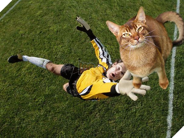 Cười không nhặt được miệng với bộ ảnh mèo xuất hiện trên sân bóng đá - Ảnh 9.