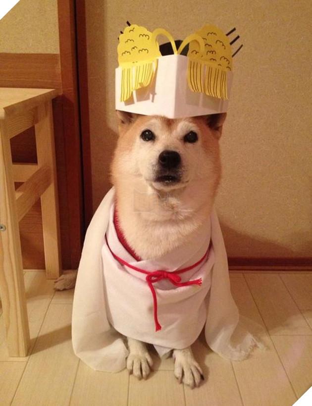 chú chó shiba mặc đồ thời trang cosplay
