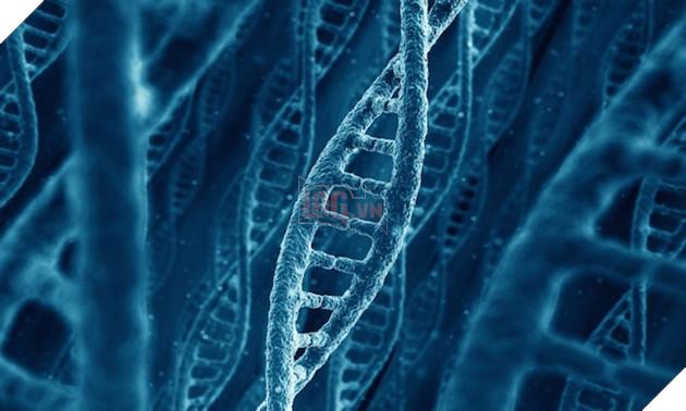 Ít nhất 75% DNA của con người là rác, nhưng cũng bởi vậy mà chúng ta còn tồn tại