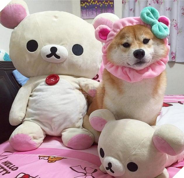 """Super-nổi tiếng """"faceless nam Shiba Inu 'trở nên chai lớn"""" chó táo """"Cosplay siêu dễ thương lười phong cách gấu khác."""