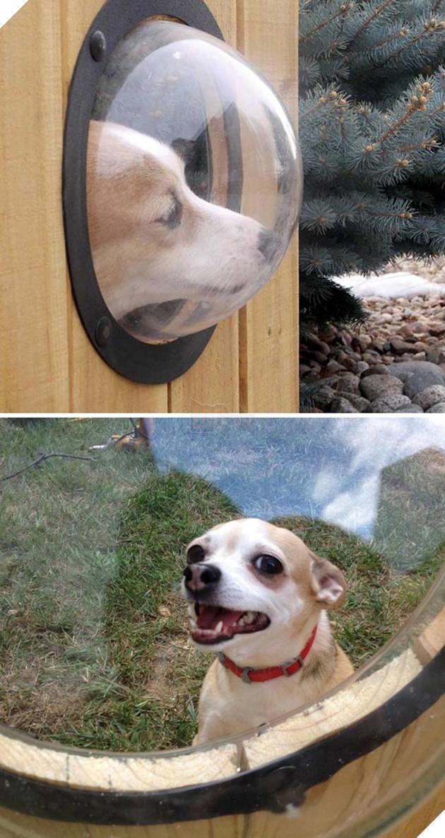 những chú chó đáng yêu