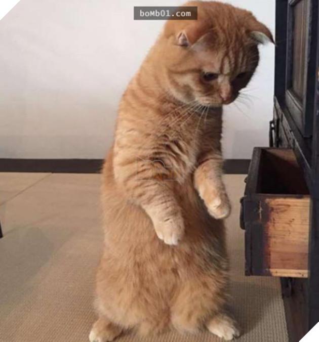 mèo dễ thương bị mất cá khô