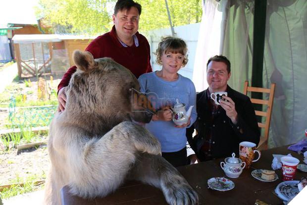 Nuôi thú cưng thế này mới đẳng cấp: Cặp đôi sống chung cùng chú gấu nặng 360kg suốt 24 năm - Ảnh 3.