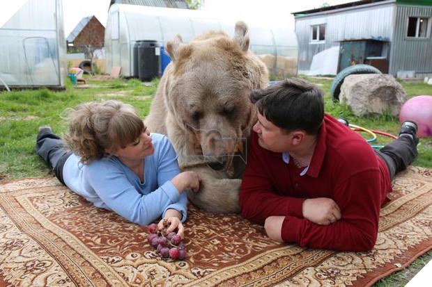 Nuôi thú cưng thế này mới đẳng cấp: Cặp đôi sống chung cùng chú gấu nặng 360kg suốt 24 năm - Ảnh 1.