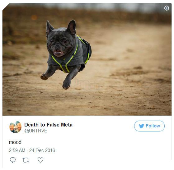 James Glazebrook, thuộc bộ phận hỗ trợ khách hàng, hiện đang ở Berlin, Đức, cũng không kém cạnh đồng nghiệp khi khoe chú chó pitbull đang chạy nhảy của mình