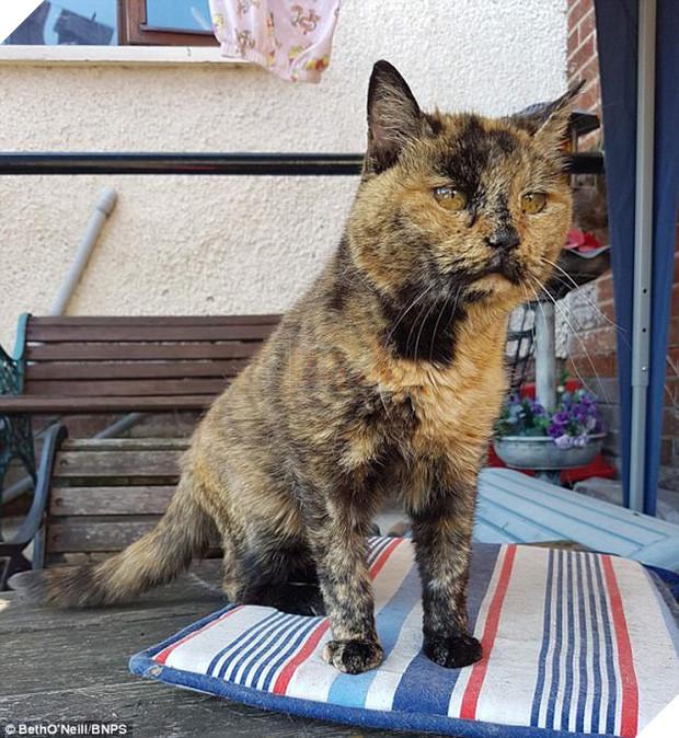 Mèo cụ sống lâu tương đương với 141 tuổi người nhưng vẫn khỏe như vâm - Ảnh 3.