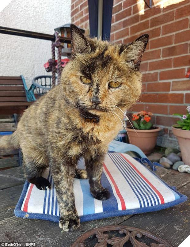 Mèo cụ sống lâu tương đương với 141 tuổi người nhưng vẫn khỏe như vâm - Ảnh 1.