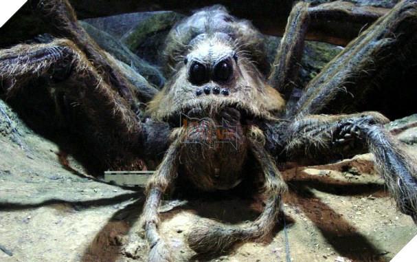 Dễ dàng thấy được những điểm tương đồng giữa Lycosa aragogi và loài nhện khổng lồ Aragog trong Harry Potter.