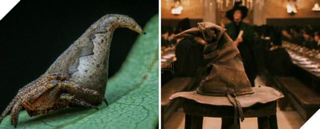 Loài nhện Eriovixia gryffindori giống y hệt chiếc mũ ma thuật tại trường Hogwarts.