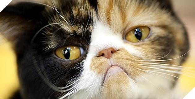 mèo đáng yêu