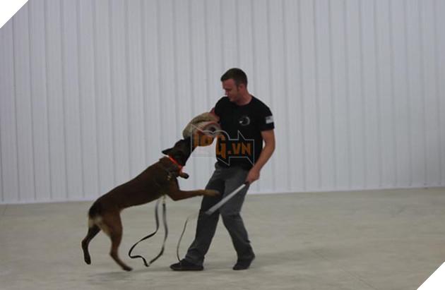 huấn luyện chó nghiệp vụ cảnh sát
