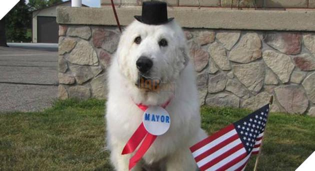 chó mèo làm thị trưởng