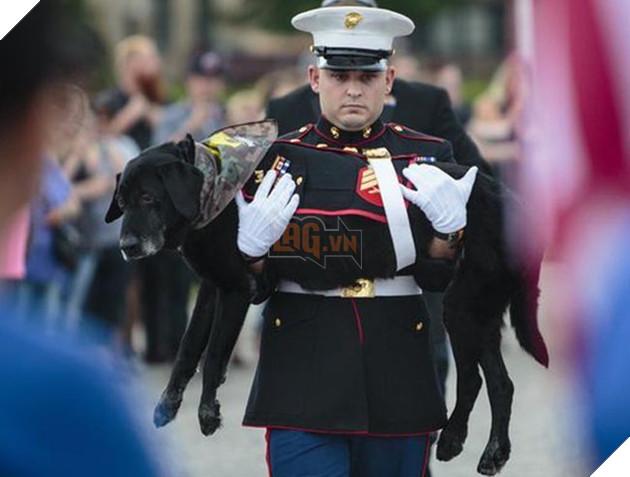 nghẹn ngào giây phút chia tay chú chó hải quân mắc bệnh ung thư