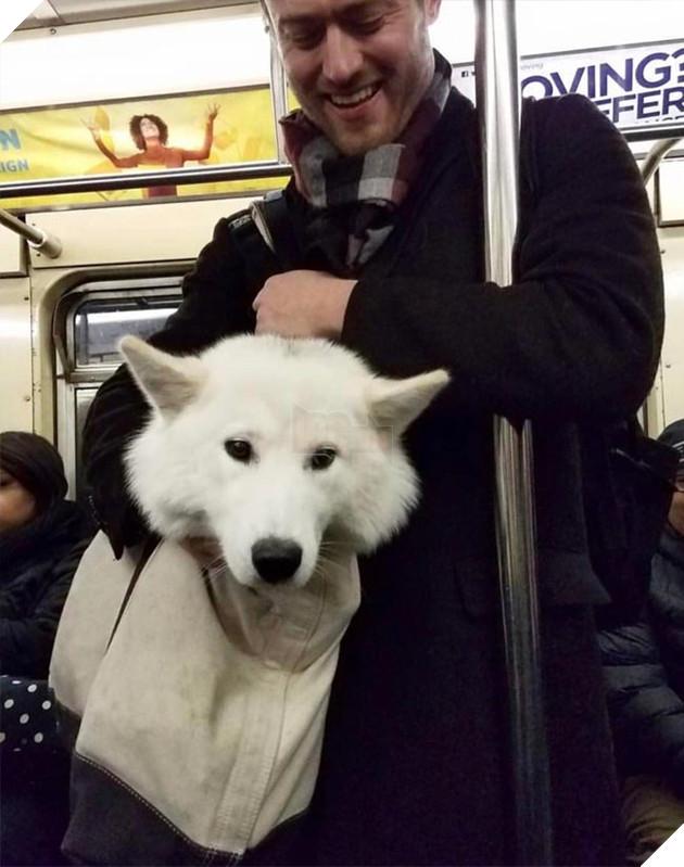 chó đi tàu điện ngầm