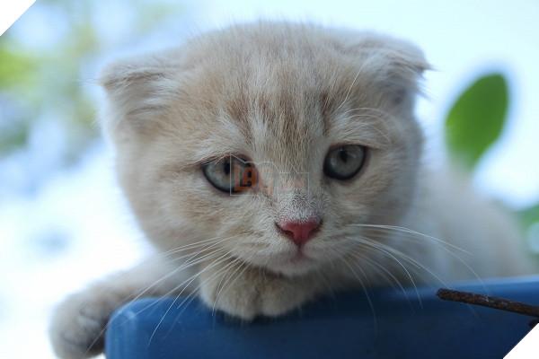 Có một chú mèo tên Chó thiên biến vạn hóa khôn lường như thế này 2