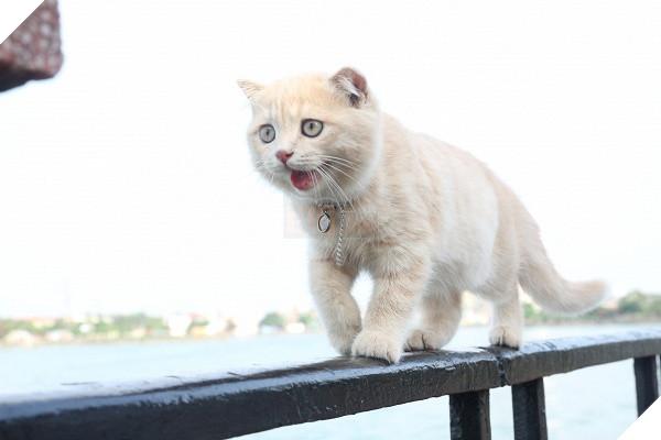 Có một chú mèo tên Chó thiên biến vạn hóa khôn lường như thế này 3