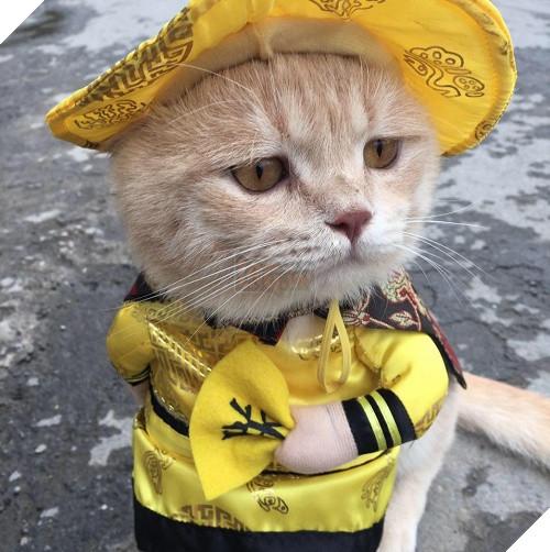 Có một chú mèo tên Chó thiên biến vạn hóa khôn lường như thế này 4