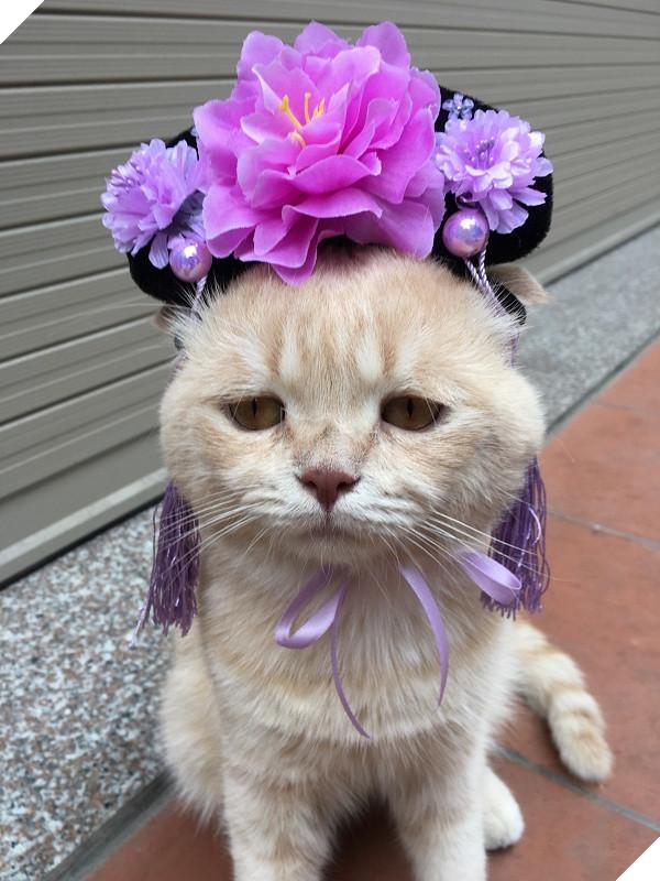Có một chú mèo tên Chó thiên biến vạn hóa khôn lường như thế này 5