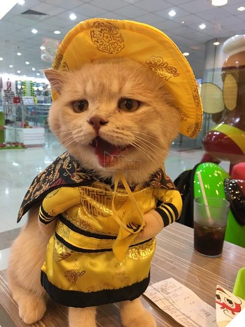 Có một chú mèo tên Chó thiên biến vạn hóa khôn lường như thế này 6