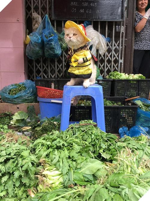 Có một chú mèo tên Chó thiên biến vạn hóa khôn lường như thế này 7