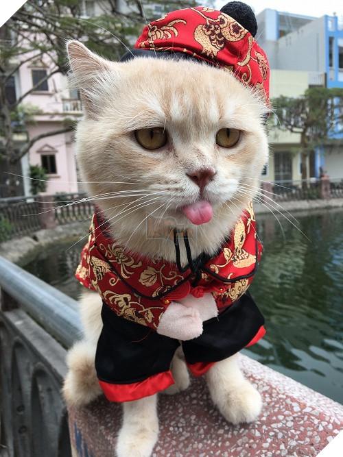 Có một chú mèo tên Chó thiên biến vạn hóa khôn lường như thế này 10