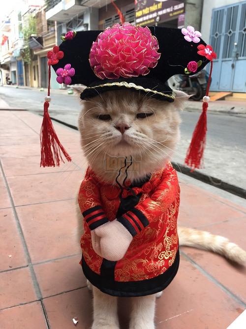 Có một chú mèo tên Chó thiên biến vạn hóa khôn lường như thế này 11