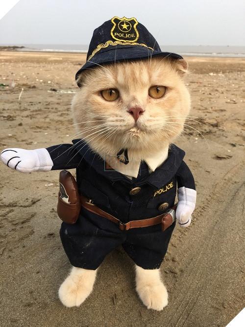 Có một chú mèo tên Chó thiên biến vạn hóa khôn lường như thế này 13