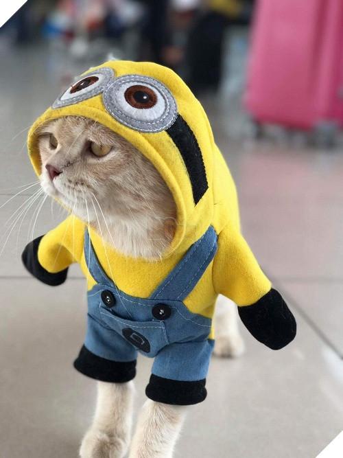 Có một chú mèo tên Chó thiên biến vạn hóa khôn lường như thế này 14