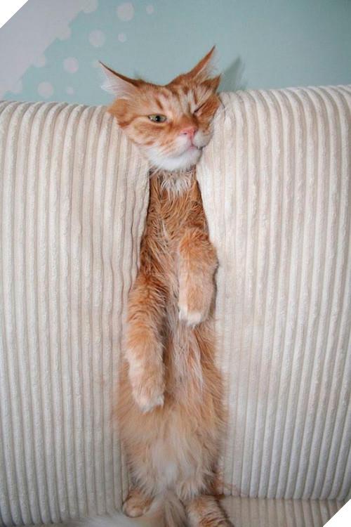 Cười đau cả bụng với 22 boss chó mèo hâm hết phần thiên hạ - Ảnh 13.