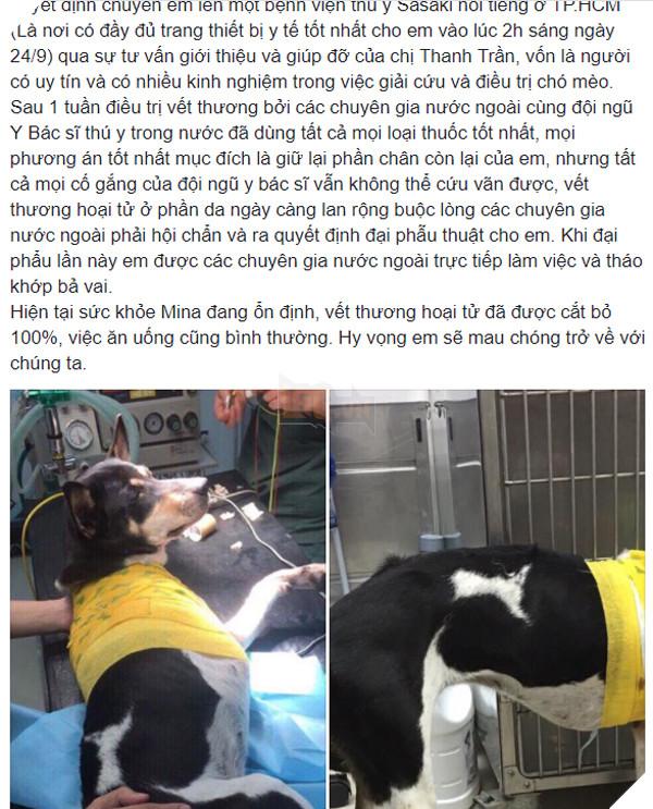 Chú chó bị chặt chân được Hội cứu trợ chó mèo ứng cứu, phải tháo khớp bả vai vì vết thương bị hoại tử nặng 2