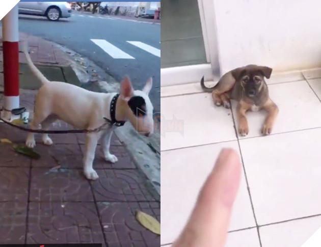 Thanh niên đi khắp phố chỉ mặt chó mèo và tuyên truyền: Rọ mõm đâu sao không đeo vô, mấy đứa Sài Gòn bị bắt hết rồi đó! - Ảnh 2.