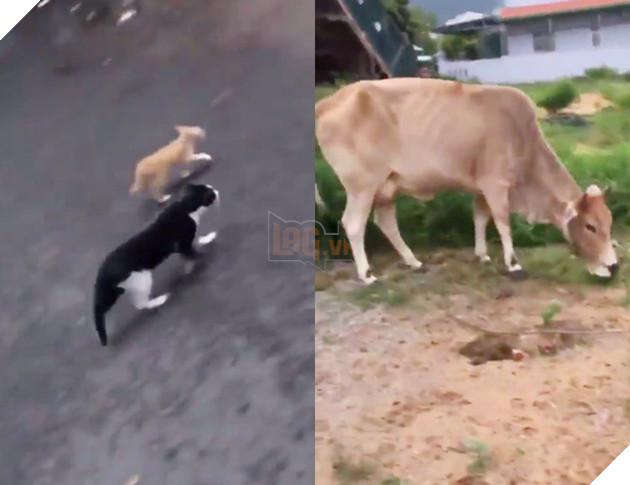 Thanh niên đi khắp phố chỉ mặt chó mèo và tuyên truyền: Rọ mõm đâu sao không đeo vô, mấy đứa Sài Gòn bị bắt hết rồi đó! - Ảnh 3.