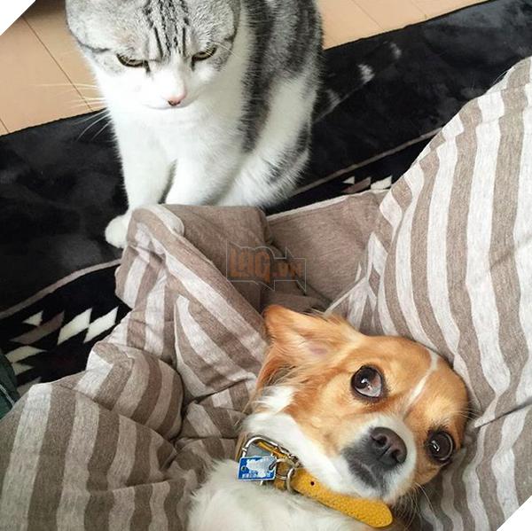 14 đôi bạn chó mèo tưởng không thân mà thân không tưởng - Ảnh 3.