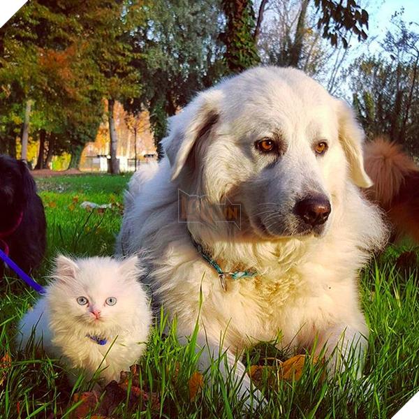 14 đôi bạn chó mèo tưởng không thân mà thân không tưởng - Ảnh 15.