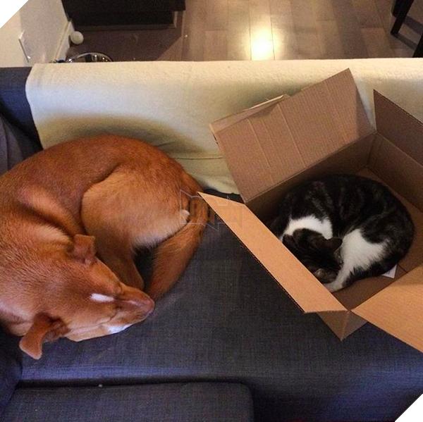 14 đôi bạn chó mèo tưởng không thân mà thân không tưởng - Ảnh 25.