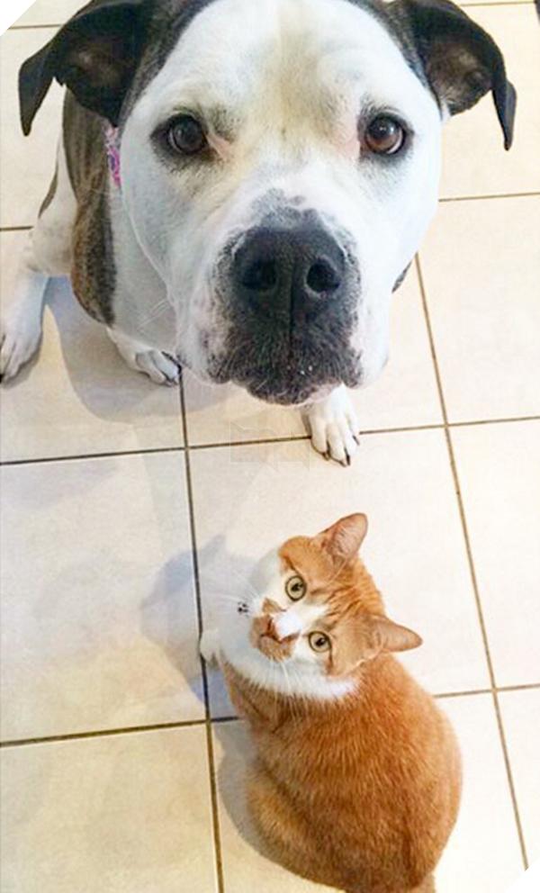 14 đôi bạn chó mèo tưởng không thân mà thân không tưởng - Ảnh 5.
